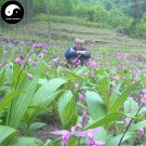 Buy Herb Bletilla Striata Seeds 400pcs Plant Orchid Bletilla For Bai Ji