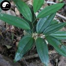 Buy Herb Poria Cocos Seeds 120pcs Plant Poria Cocos For Fu Ling