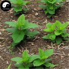 Buy Herb Scrophularia Seeds 60pcs Plant Chinese Figwort Root For Xuan Shen