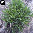 Buy Herb Radix Stellariae Seeds 400pcs Plant Stellaria Dichotoma For Yin Chai Hu