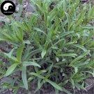Buy Herb Radix Stellariae Seeds 200pcs Plant Stellaria Dichotoma For Yin Chai Hu