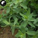 Buy Herb Radix Stellariae Seeds 100pcs Plant Stellaria Dichotoma For Yin Chai Hu