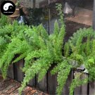 Buy Asparagus Seeds 120pcs Plant Asparagus Cochinchinensis For Tian Men Dong