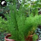 Buy Asparagus Seeds 240pcs Plant Asparagus Cochinchinensis For Tian Men Dong