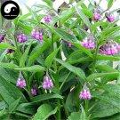 Buy RADIX ARNEBIAE Seeds 240pcs Plant LITHOSPERMI For Purple Grass Zi Cao