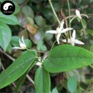 Buy RADIX CLEMATIDIS Seeds 120pcs Plant Clematis Chinensis For Wei Ling Xian