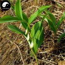 Buy Rhizoma Polygonati Seeds 30pcs Plant Polygonatum Sibiricum For Huang Jing
