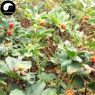 Buy Rhizoma Paridis Seeds 24pcs Plant Chinese Paris Rhizome For Yunnan Chong Lou