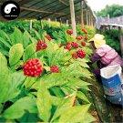 Buy Korean Ginseng Seeds 100pcs Plant Chinese Panax Ginseng For Gao Li Shen