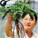 Buy Millettia Specisoa Seeds 240pcs Plant Millettia Specisoa Champ For Niu Da Li