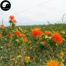Buy Flos Carthami Seeds 400pcs Plant Carthamus Tinctorius For Safflower Hong Hua