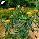 Buy Flos Carthami Seeds 200pcs Plant Carthamus Tinctorius For Safflower Hong Hua