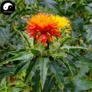 Buy Flos Carthami Seeds 100pcs Plant Carthamus Tinctorius For Safflower Hong Hua