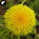 Buy Herba Taraxaci Seeds 100pcs Plant Mongolian Dandelion Herb For Pu Gong Ying