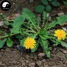 Buy Herba Taraxaci Seeds 200pcs Plant Mongolian Dandelion Herb For Pu Gong Ying