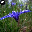 Buy Herba Kalimeridis Seeds 100pcs Plant Indian Kalimeris Herb For Ma Lan