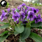 Buy Herba Violae Seeds 400pcs Plant Philippine Violet Herb For Zi Hua Di Ding