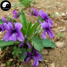 Buy Herba Violae Seeds 200pcs Plant Philippine Violet Herb For Zi Hua Di Ding