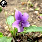Buy Herba Violae Seeds 100pcs Plant Philippine Violet Herb For Zi Hua Di Ding