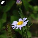 Buy Herb Kalimeris Seeds 100pcs Plant Kalimeris Lautureana For Shan Ma Lan