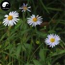 Buy Herb Kalimeris Seeds 200pcs Plant Kalimeris Lautureana For Shan Ma Lan