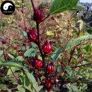 Buy Herb Hibiscus Sabdariffa Seeds 240pcs Plant Roselle Flower For Mei Gui Jia