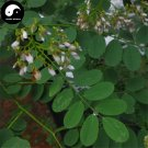 Buy Sophora Davidii Seeds 60pcs Plant Sophora Viciifolia Tree For Bai Ci Hua