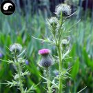 Buy Milk Thistle Seed 400pcs Plant Holy Thistle Silybum Marianum For Shui Fei Ji
