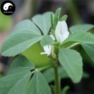 Buy Common Fenugreek Seeds 200pcs Plant Chinese Trigonellae Herb For Hu Lu Ba