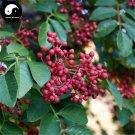 Buy Red Peppercorn Tree Seeds 400pcs Plant Zanthoxylum Bungeanum For Hua Jiao