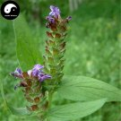 Buy Prunella Vulgaris Seeds 100pcs Plant Herb Spica Prunellae For Xia Ku Cao