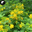 Buy Cassia Seeds 100pcs Plant Herb Sickle Senna For Cao Jue Ming Zi