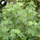 Buy Cassia Seeds 200pcs Plant Herb Sickle Senna For Cao Jue Ming Zi