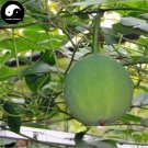 Buy Cucumber Fruit Seeds 240pcs Plant Herb Fructus Trichosanthis For Gua Lou