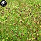 Buy Herb Flax Seeds 400pcs Plant Chinese Lium Usitatissimum Linseed For Ya Ma