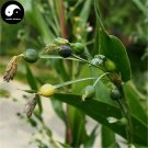 Buy Coix Chinensis Seeds 200pcs Plant Chinese Herb Coicis For Barry Yi Mi