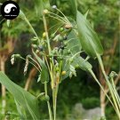 Buy Coix Chinensis Seeds 400pcs Plant Chinese Herb Coicis For Barry Yi Mi