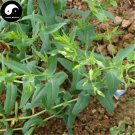 Buy Cowherb Seeds 100pcs Plant Vaccaria Segetalis For Herb Wang Bu Liu Xing