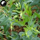 Buy Cowherb Seeds 200pcs Plant Vaccaria Segetalis For Herb Wang Bu Liu Xing