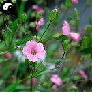 Buy Cowherb Seeds 400pcs Plant Vaccaria Segetalis For Herb Wang Bu Liu Xing