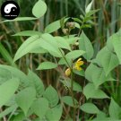Buy Cassia Occidentalis Seeds 100pcs Plant Herba Coffee Senna For Wang Jiang Nan