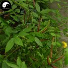 Buy Cassia Occidentalis Seeds 400pcs Plant Herba Coffee Senna For Wang Jiang Nan