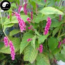Buy Polygoni Orientalis Seeds 400pcs Plant Polygonum Orientale For Shui Hong Hua