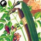Buy Oroxylum Indicum Seeds 120pcs Plant Oroxyli Tree For Herb Mu Hu Die