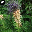 Buy Sophora Alopecuroides Seeds 120pcs Plant Herb Bitter Beans For Ku Dou Zi