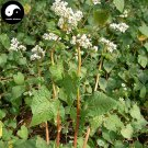Buy Herb Buckwheat Seeds 200pcs Plant Fagopyrum Esculentum For Qiao Mai