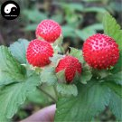 Buy Indian Strawberry Seeds 200pcs Plant Herba Duchesneae Indicae For She Mei