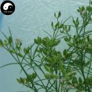 Buy Cuminum Cyminum Seeds 100pcs Plant Herb Cumin For Chinese Spices Zi Ran