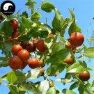 Buy Wild Jujube Tree Seeds 60pcs Plant Ziziphus Jujuba For Chinese Suan Zao Ren