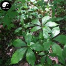 Buy Siberian Ginseng Seeds 60pcs Plant Acanthopanax Senticosus For Ci Wu Jia